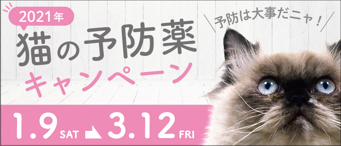 【ALLONE動物病院】猫の予防薬キャンペーン(2021年1月9日~3月12日まで)